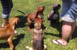 Puppies at playgroup